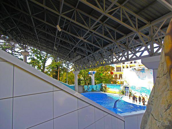 Дельфинарий в парке «Ривьера» в Сочи